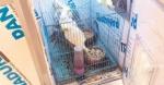 Sultanbeyli'de Kaçak Papağan Operasyonu